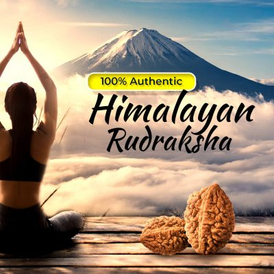 Lab Certified Two Faced (2 Mukhi) Rudraksha Good for Pooja,Yoga, Meditation