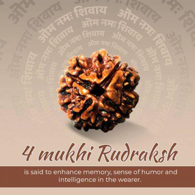Four Faced (4 Mukhi) Lab Certified Rudraksha Bead Good for Pooja,Yoga, Meditation